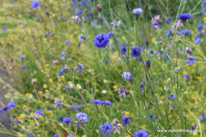 siene river walk wildflowers