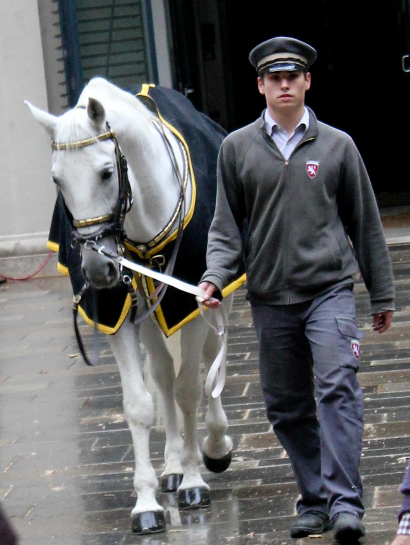 vienna horse show