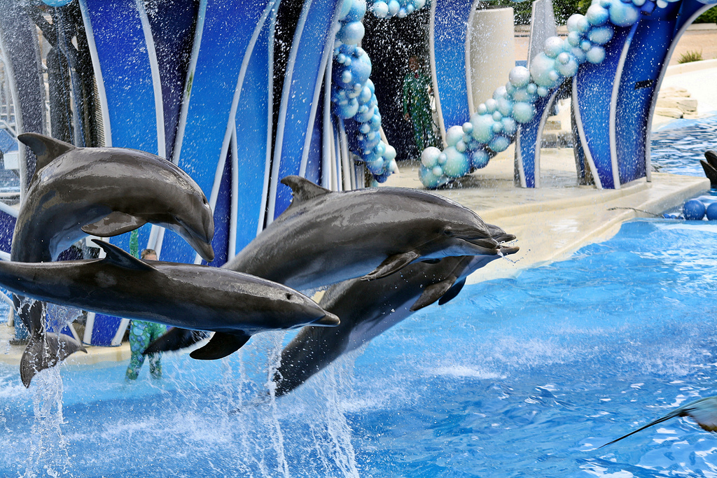 sea world dolphins