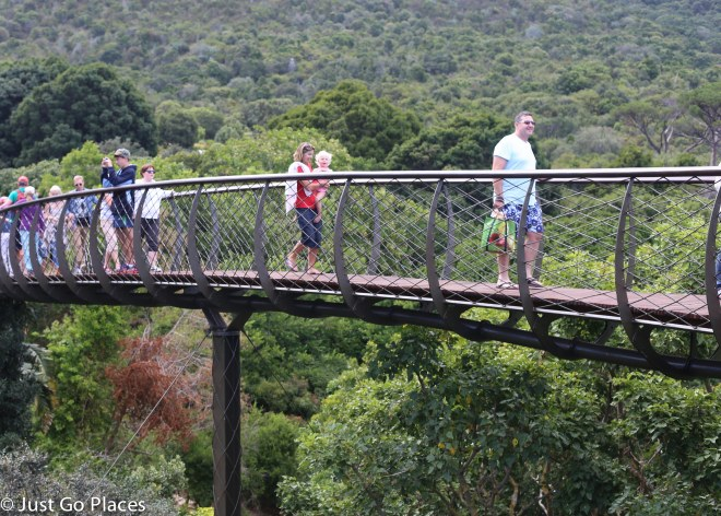boomslang in Kirstenbosch Botanical Garden