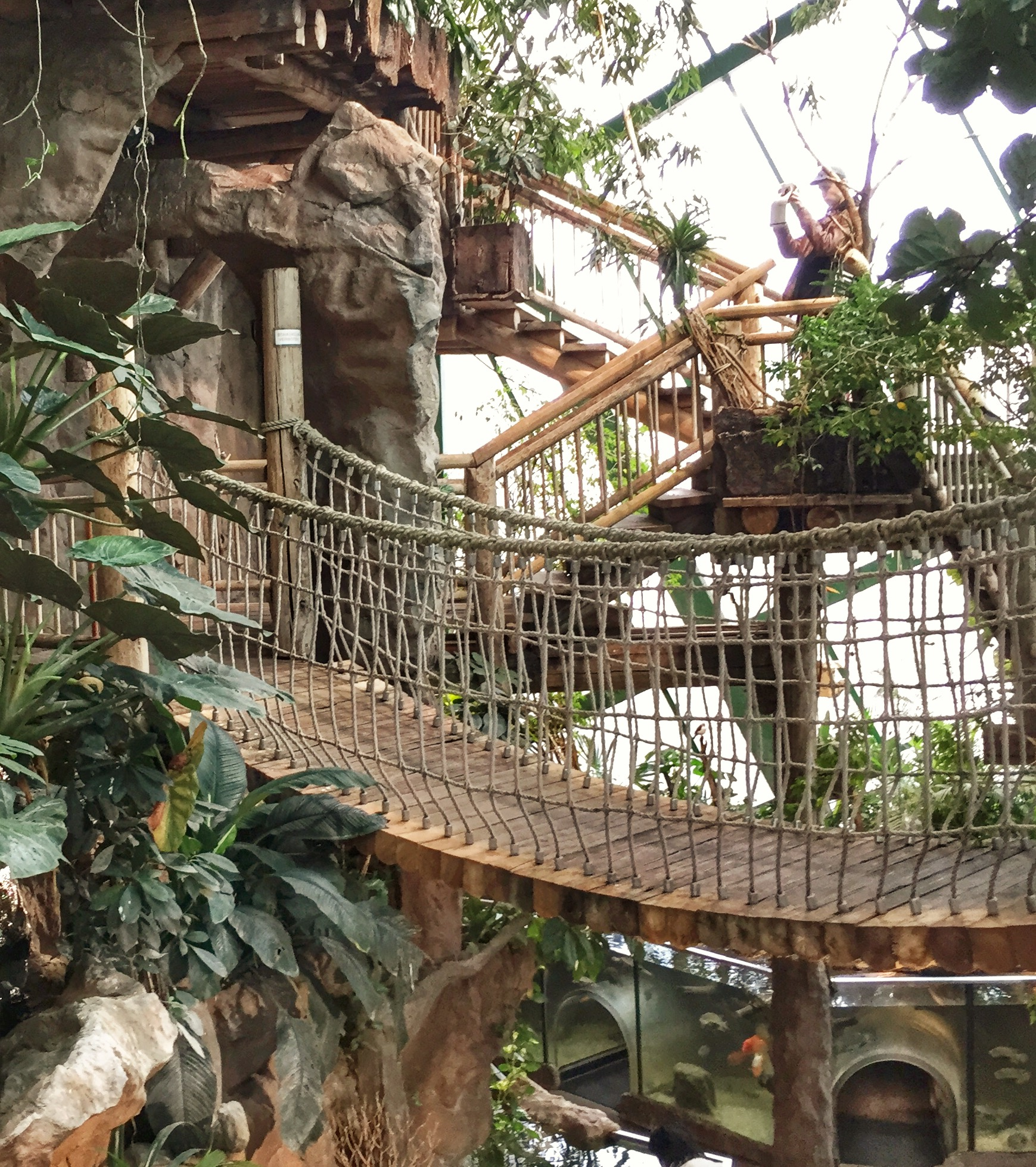 haus des Meeres tropical forest