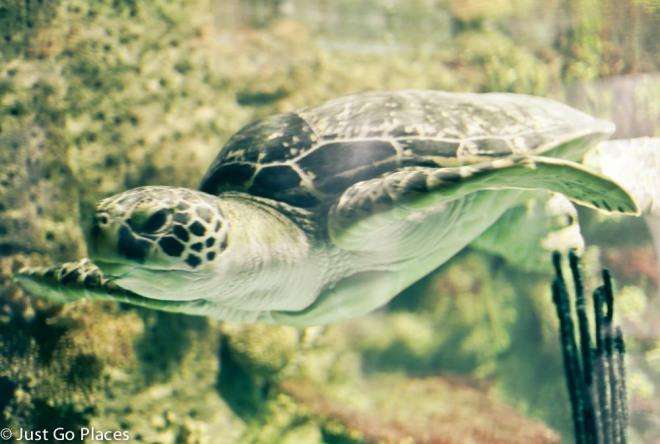 turtle at haus des Meeres