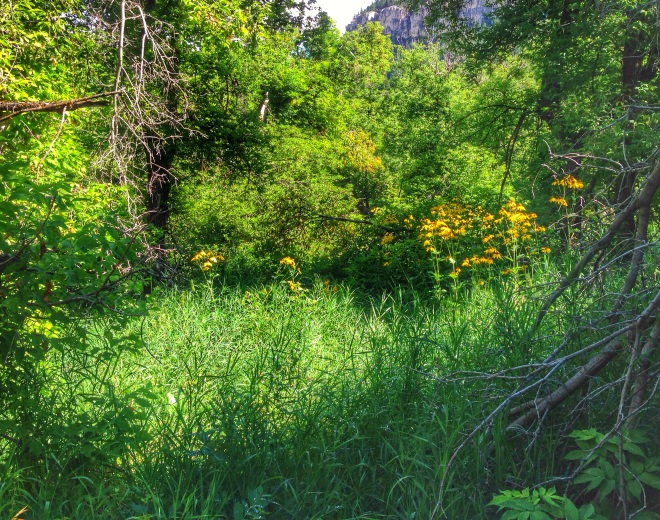 undergrowth from hiking in the Black Hills National Park