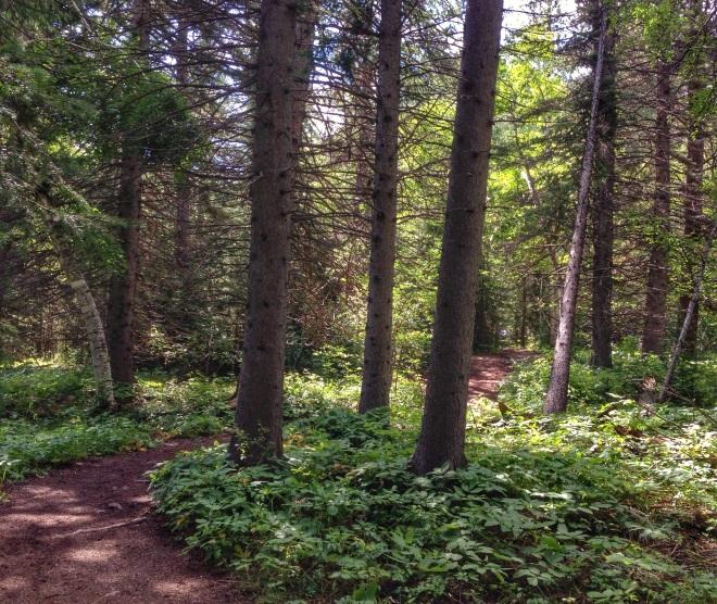 Hiking in Black Hills National Park