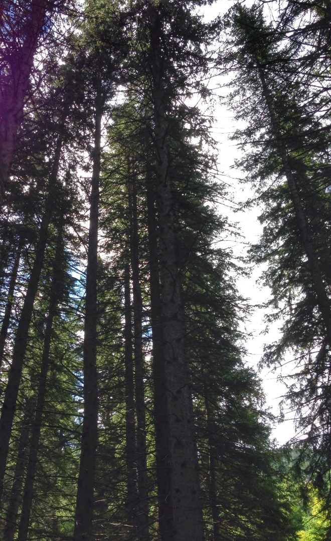 The forests of the Black Hills National Park