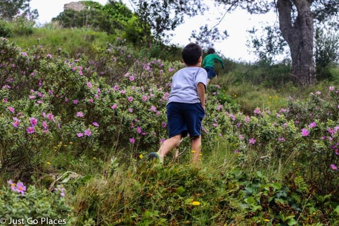 climbing through the wildflowers