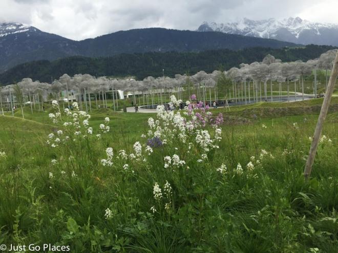wildflowers at Swarovski Crystal Worlds