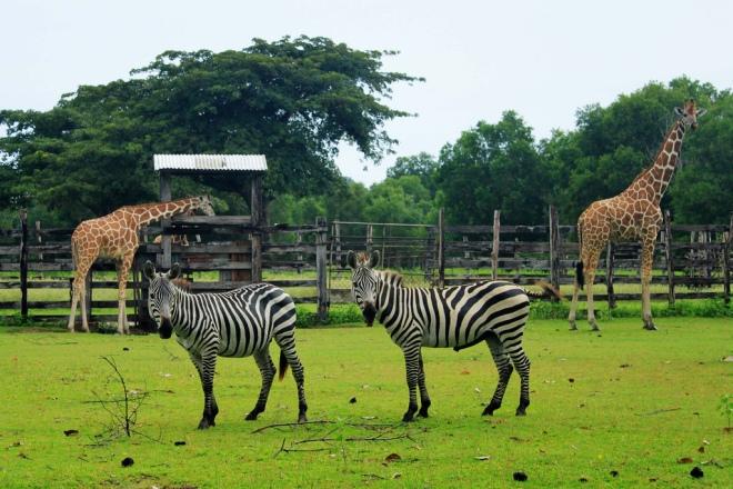 Calauit Wildlife Reserve