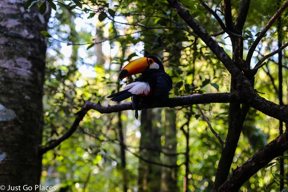 toucan in brasil