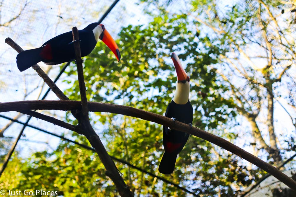 toucans on a tree